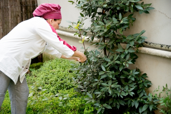 Picking fresh herbs from the garden during  our Tuscan culinary lessons!