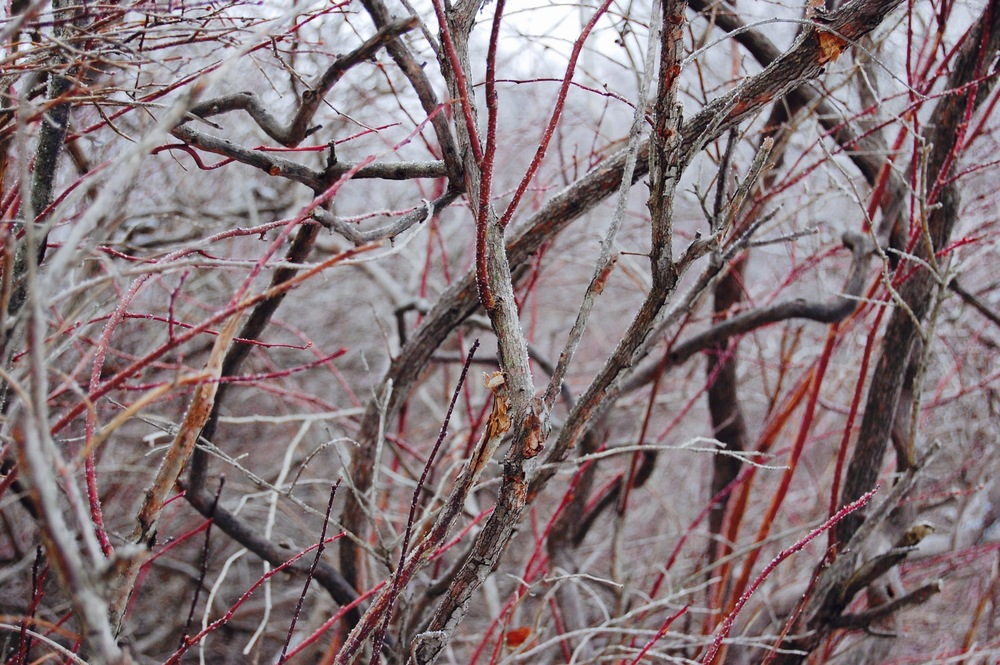 Winter Red, 2016, Susan McClory