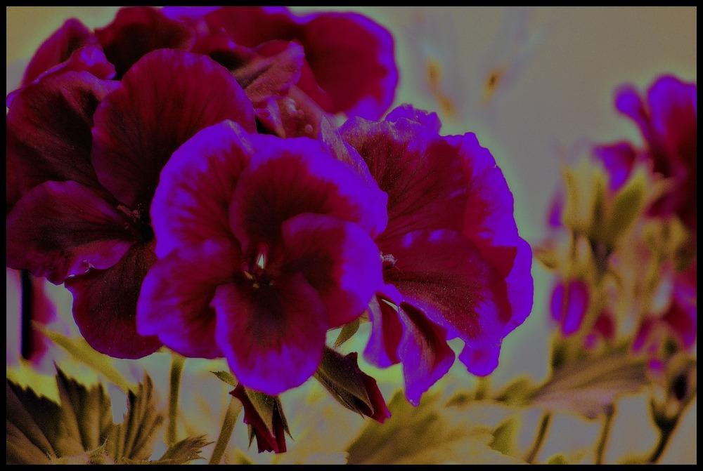 Vintage Bold Bloom, Susan McClory 2016
