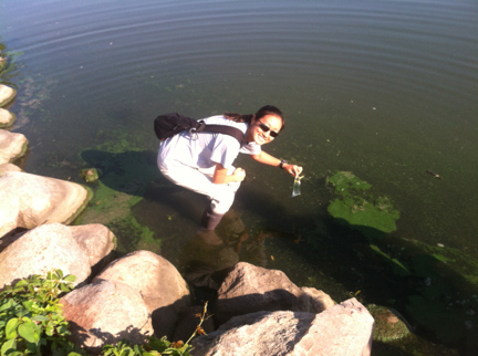 Sylvia sampling a bloom of  Aphanizomenon  in Silver Lake, Iowa.