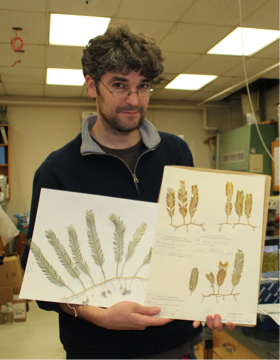 Thomas holding herbarium sheets of the western Atlantic endemics  C. ashmeadii  and  C. floridana.