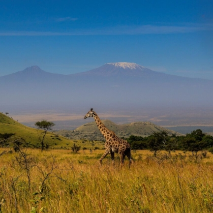 KAMPI YA KANZI   Increasing reservations for this luxury safari camp by over 1000% through improved SEO and PPC activity