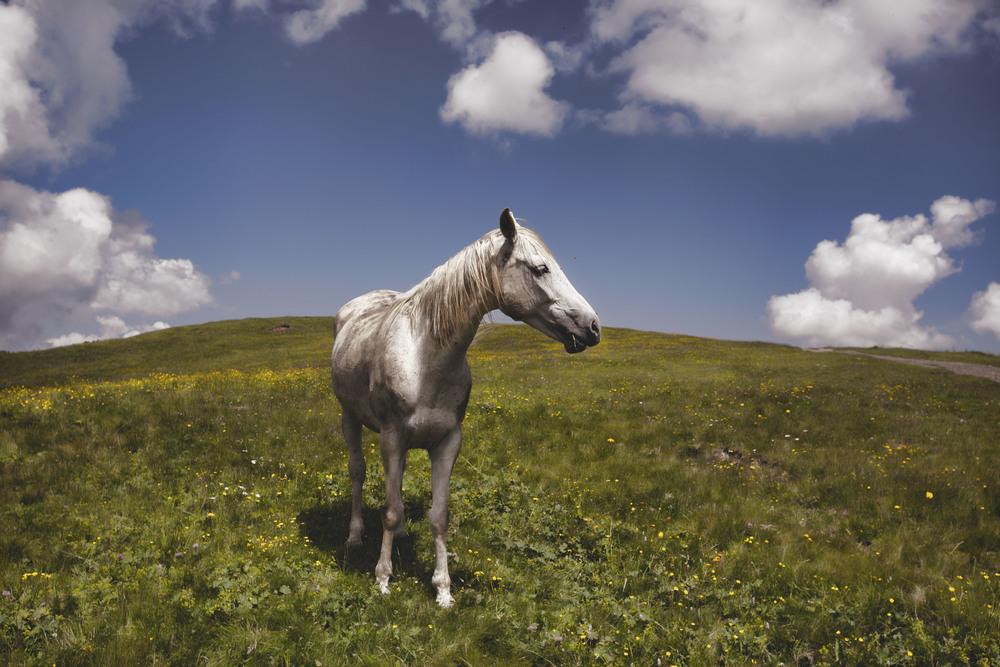 horsepost.jpg