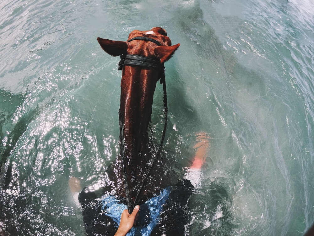 horsewater (1 of 1).jpg