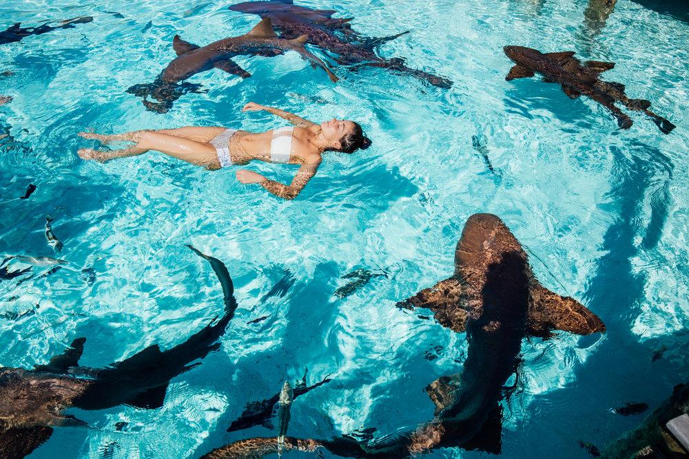 Sharkme2 (1 of 1).jpg