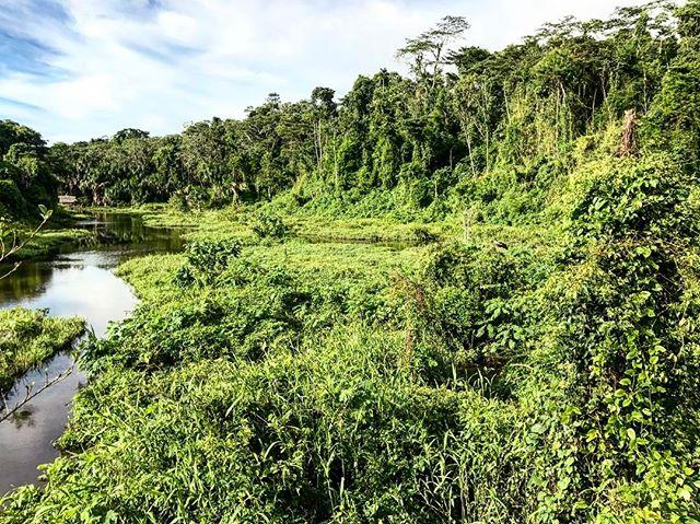 #green #naturephotography #traveler #travelphotography #trip #lake #sunny #amazon