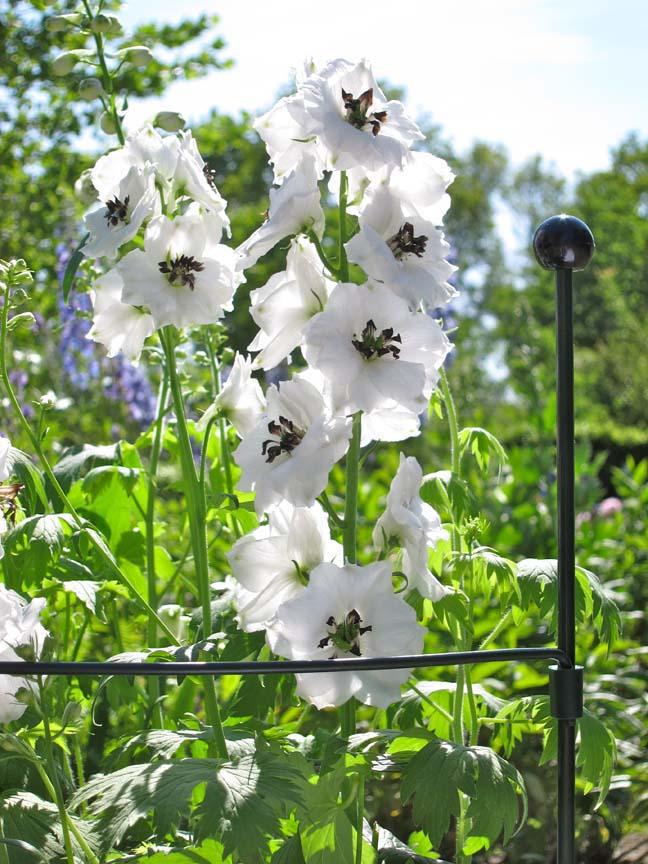 Peacock Garden Support.jpg