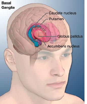 Photo Credit: Medical Look (http://www.medicalook.com/Neurological_disorders/Tourettes_syndrome.html)