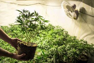 Photo: Medicinal Marijuana Association