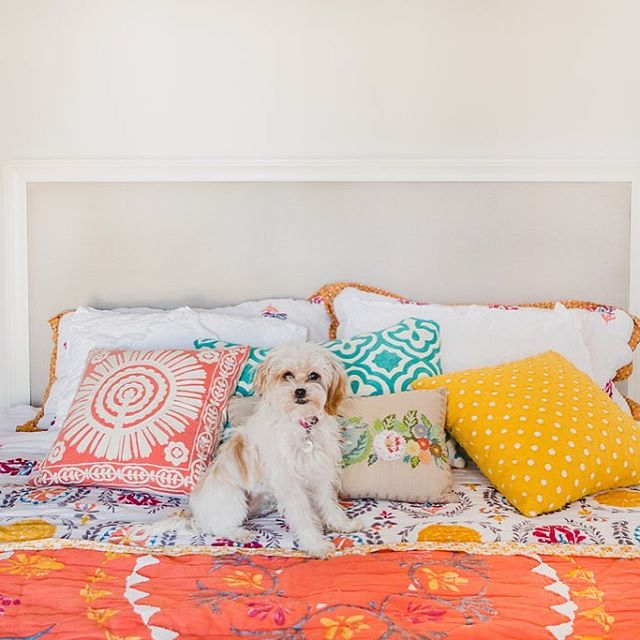 You're welcome for the cuteness overload. Stay tuned for one of the most colorful and all-around wonderful home tours from one of my all-time fav clients, Lola and her mom, @sunnae! 🐾🌺💗