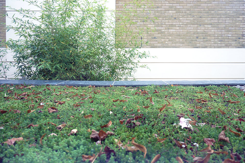 Contemporary extension Winchester, Hampshire nears completion - Sedum roof