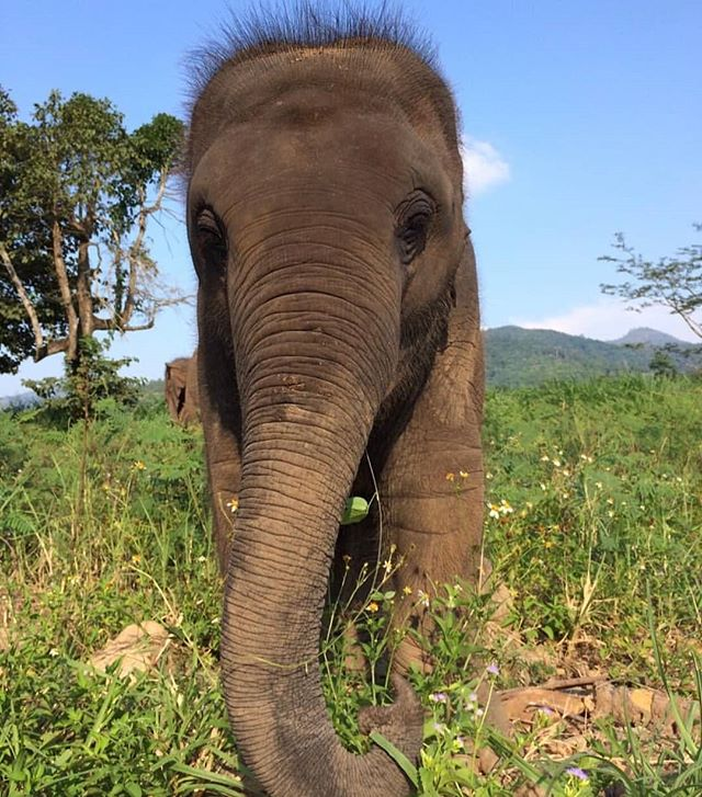 The baby at the foundation 🐘 -  Pic from the Save Elephant Foundation! -  #elephants #Elepants #animals #conservation #love