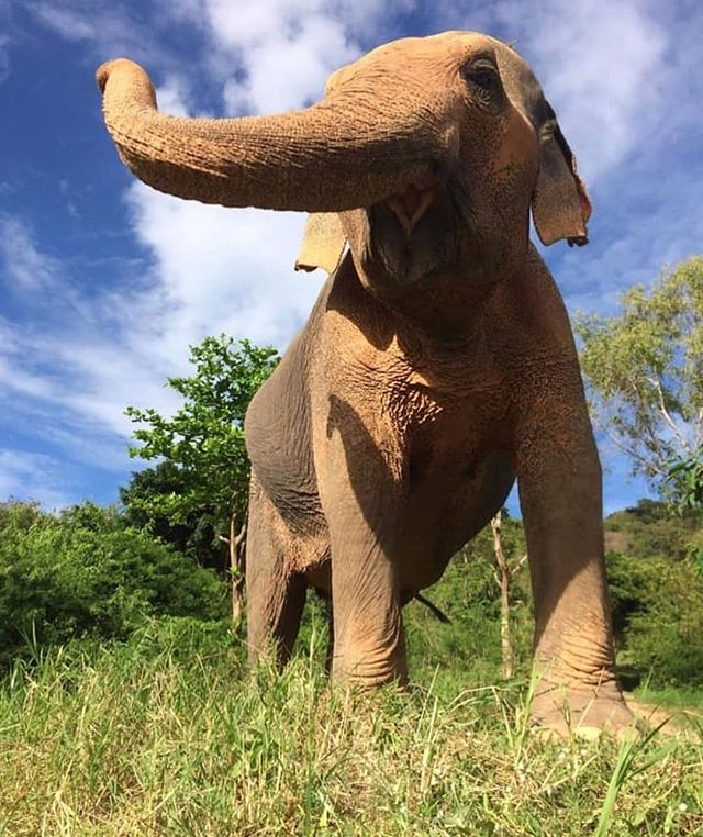 Happy girl 😄🐘 -  Take a visit to the Save Elephant Foundation!  #elephants #elepants