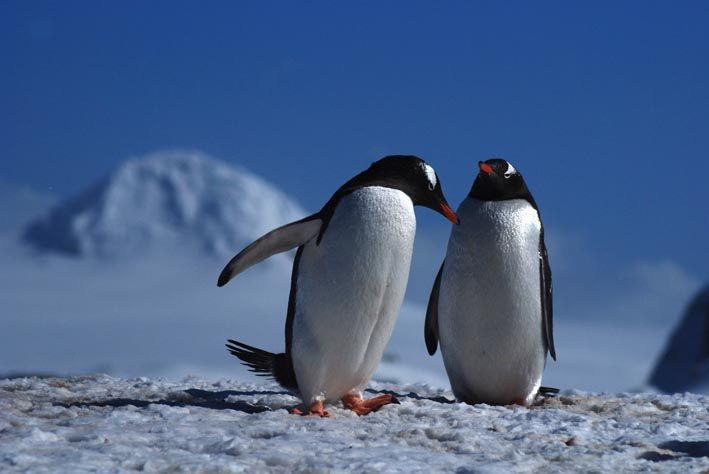 antarctica3d_glacier