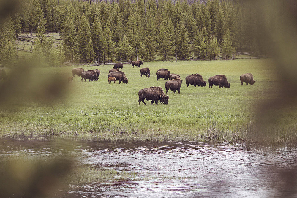 2017-06-13_Yellowstone_Nationalpark_100.jpg