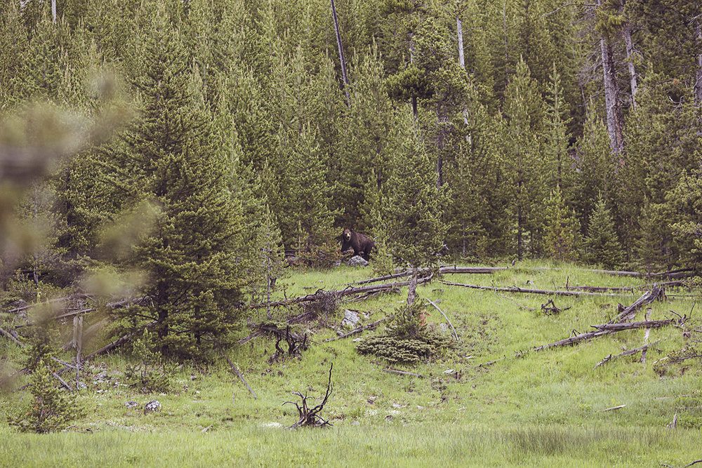 2017-06-13_Yellowstone_Nationalpark_209.jpg