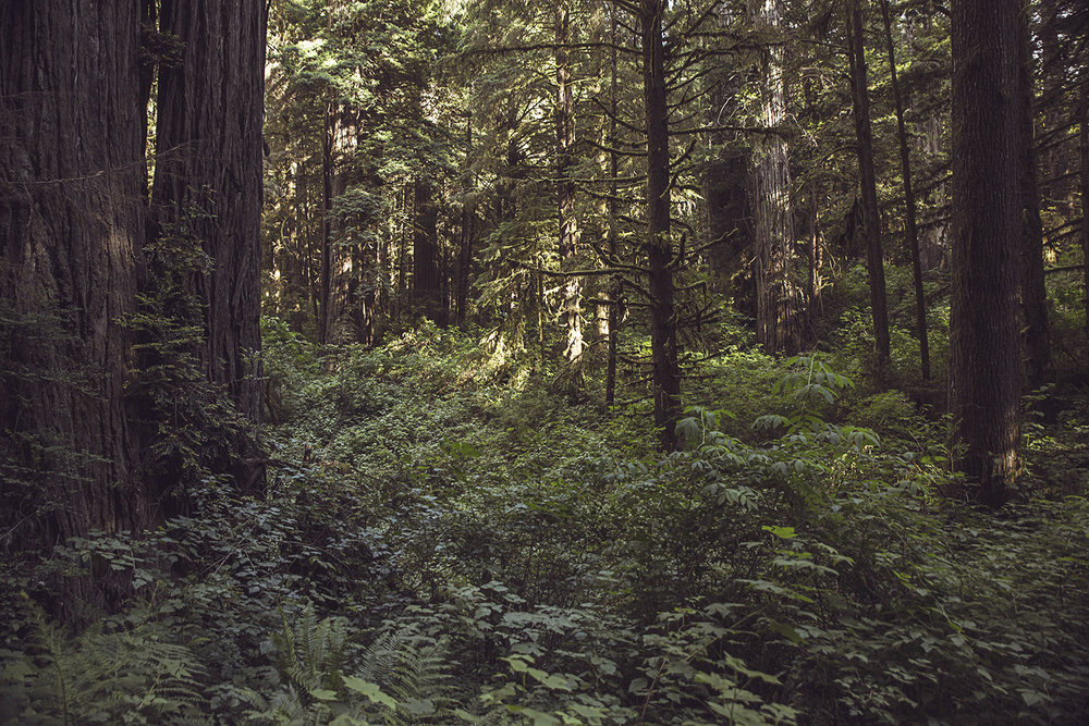 2017-06-20_Redwoods_Nationalpark_128.jpg