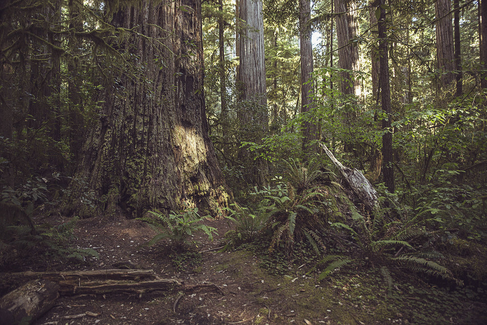 2017-06-20_Redwoods_Nationalpark_194.jpg