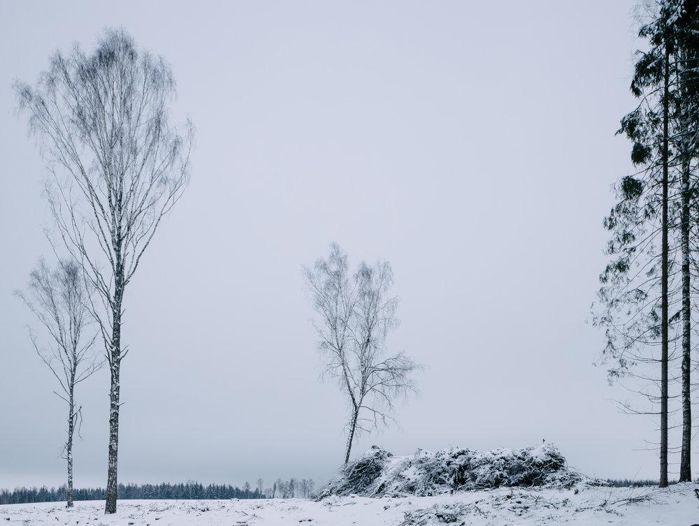 Koruste, Tartumaa, Estonia, December 2018