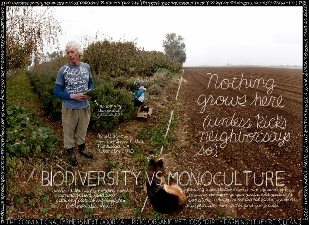 biodiversityvsmono-1024x748.jpeg