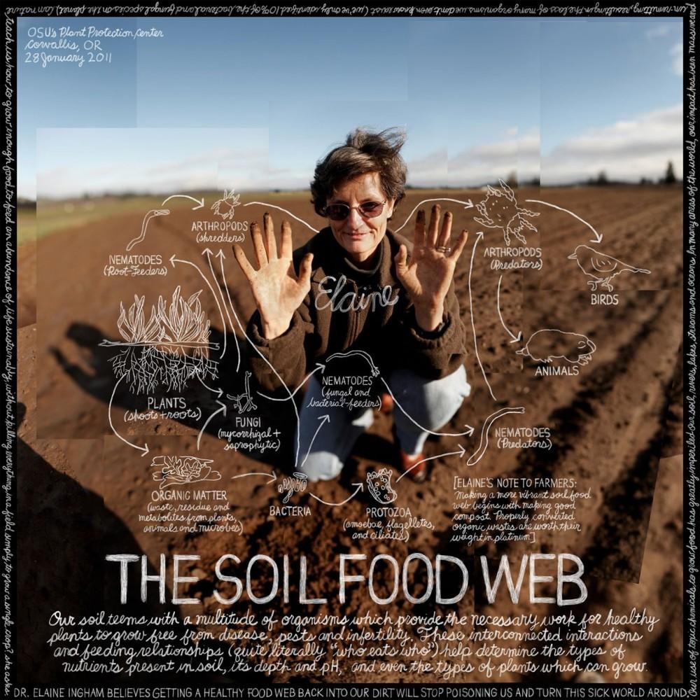 soilfoodweb-1024x1024.jpeg