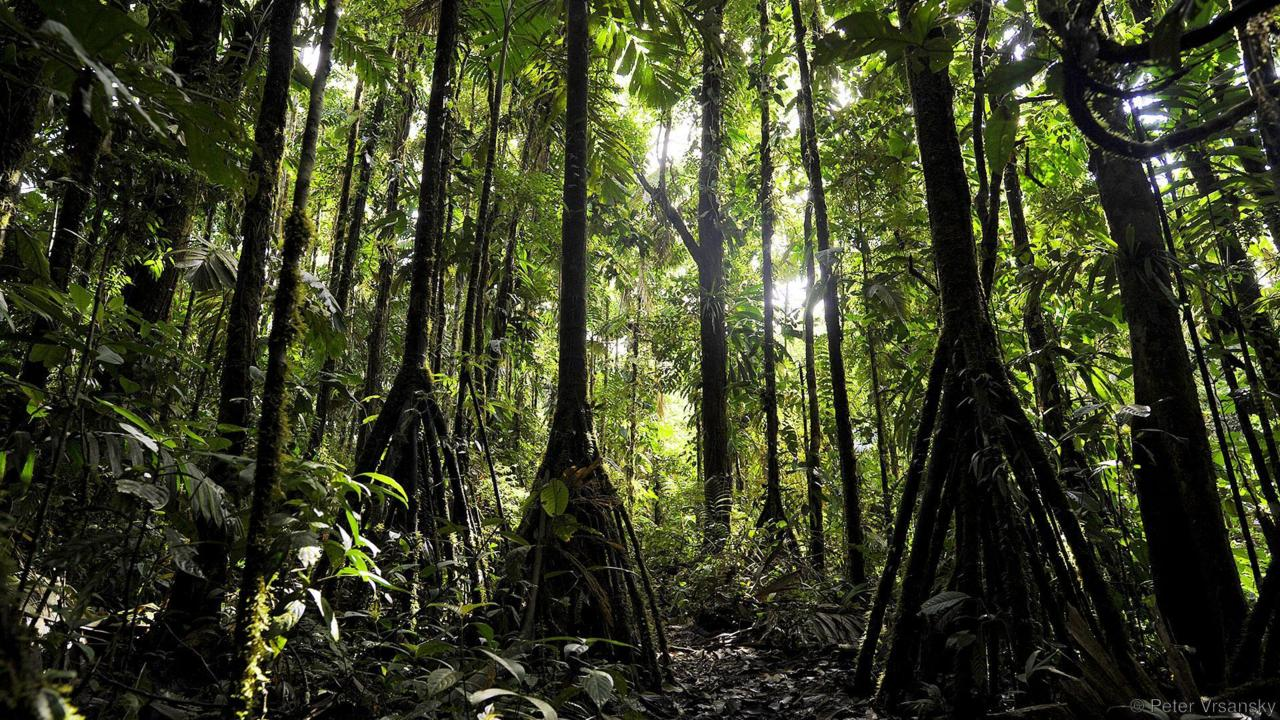 fotografías de la selva amazónica