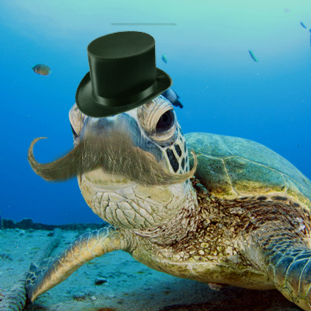 TUrtleTurtle_0.png