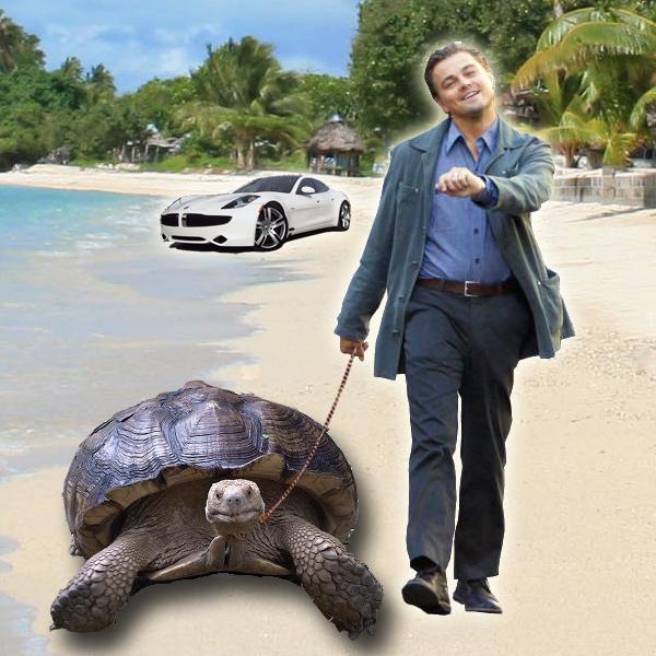 TurtleCell Leonardo DiCaprio.jpg