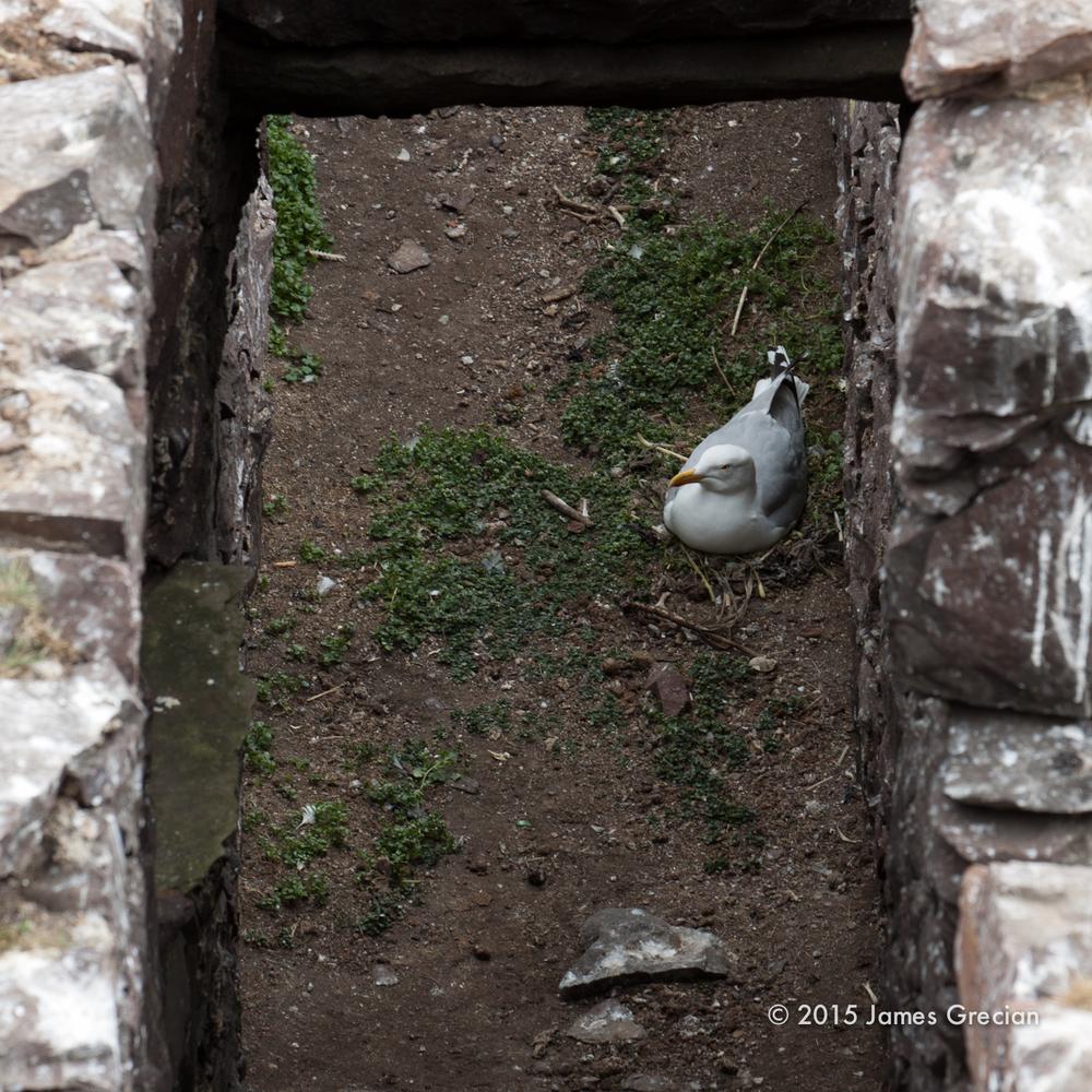 Prison nest.jpg