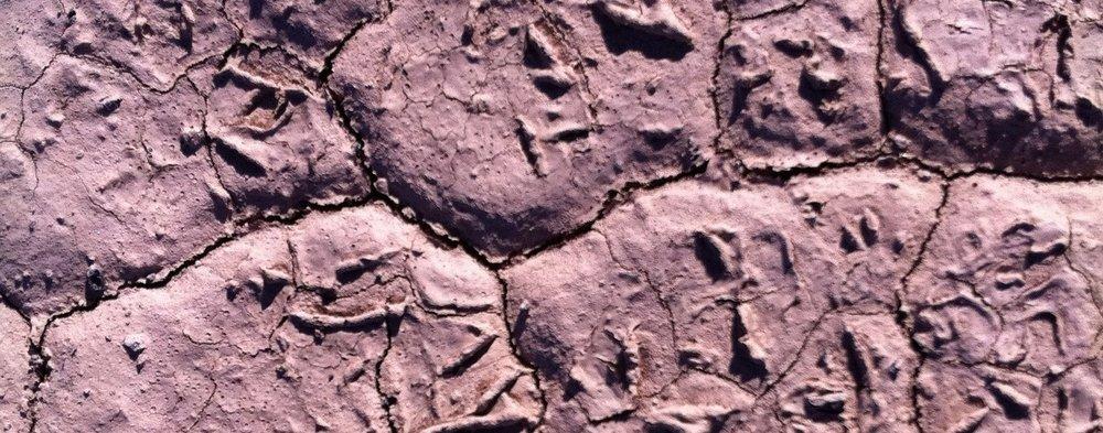 earth-243016_1920.jpg