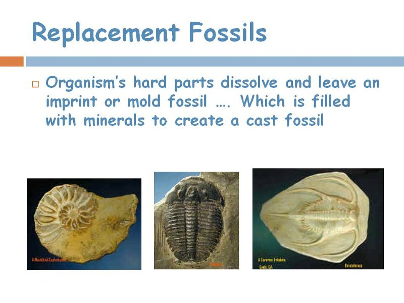 7replacement fossils.jpg