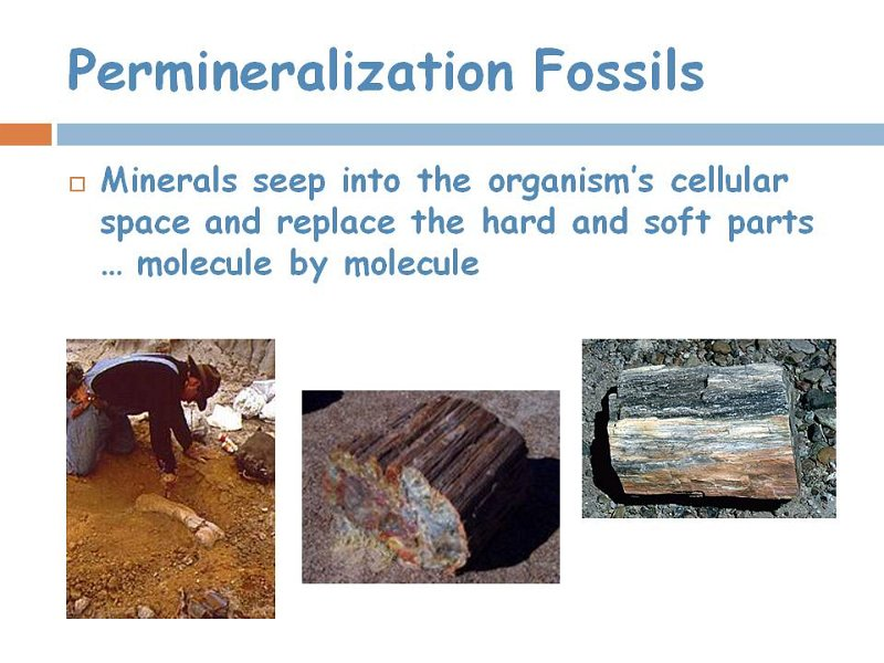 8permineralization fossils.jpg