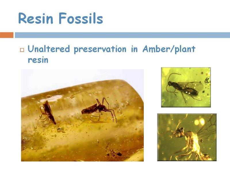 9resin fossil.jpg