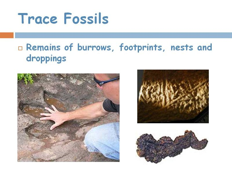 10trace fossils.jpg
