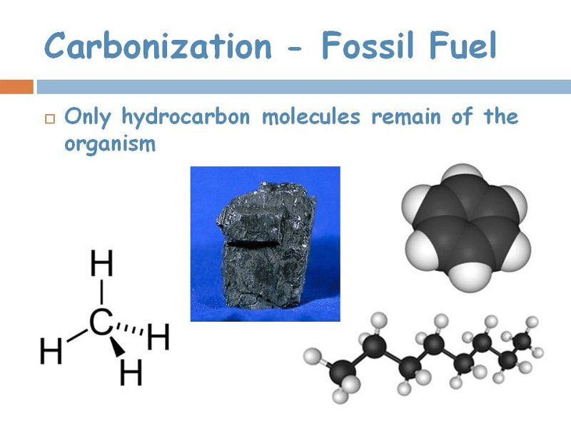 12carbonization.jpg
