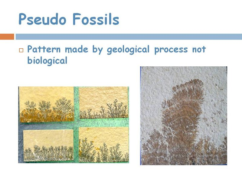 13pseudo fossils.jpg