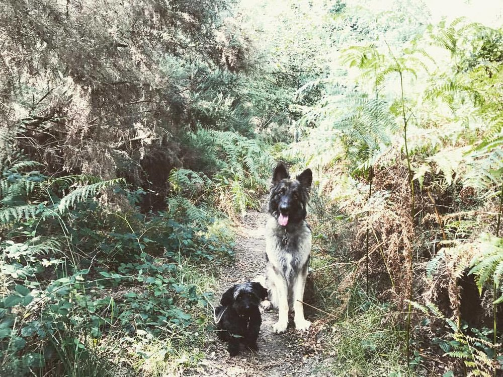 CeCe & Billy - Kima will most certainly take your dog for an extraordinary walk, yet I would never refer to her a