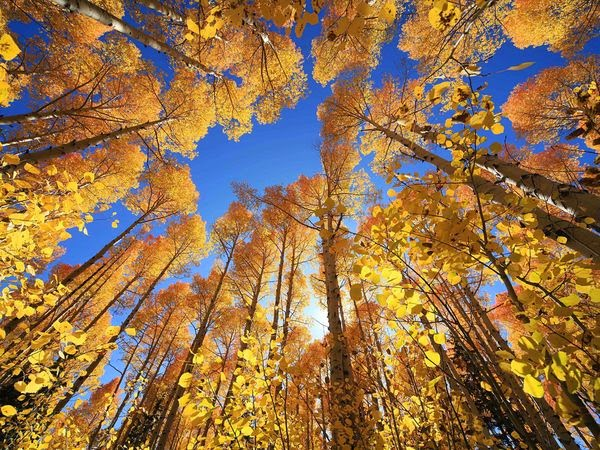 yellow-fall-trees_42012_600x450.jpg