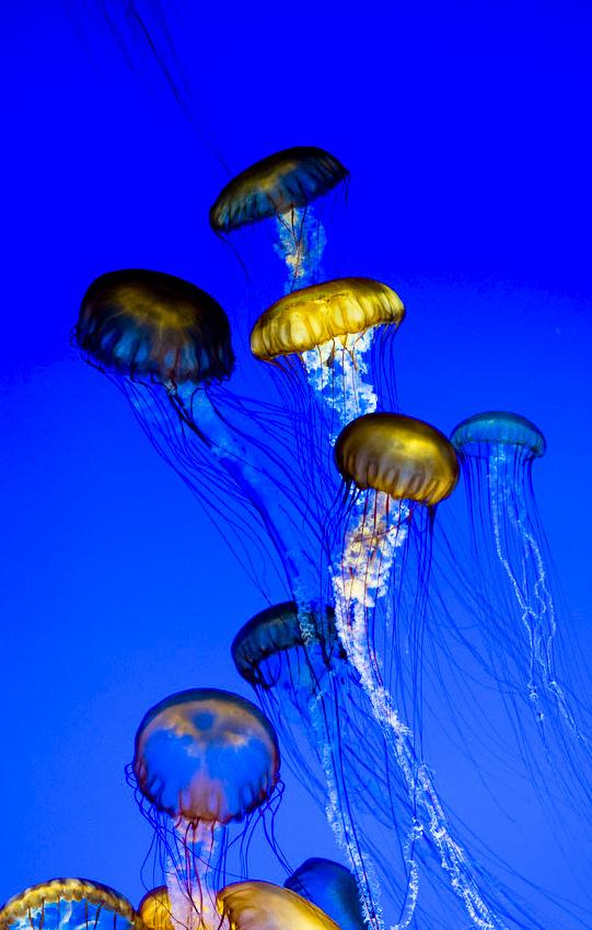 jellyFish_01.jpg