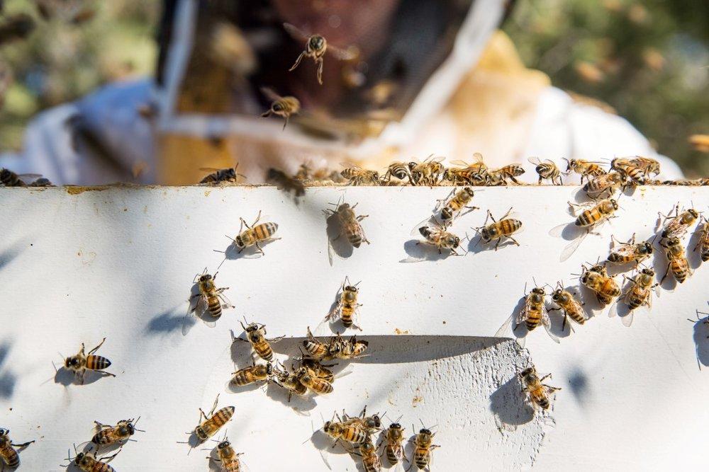 BeeKeeperHR_EWP-14 (Medium) (2).jpg