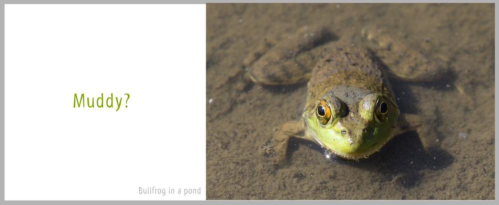 09Bullfrog.jpg