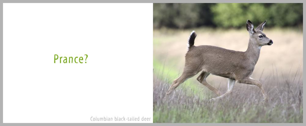 02Bond-9834.Deer.jpg