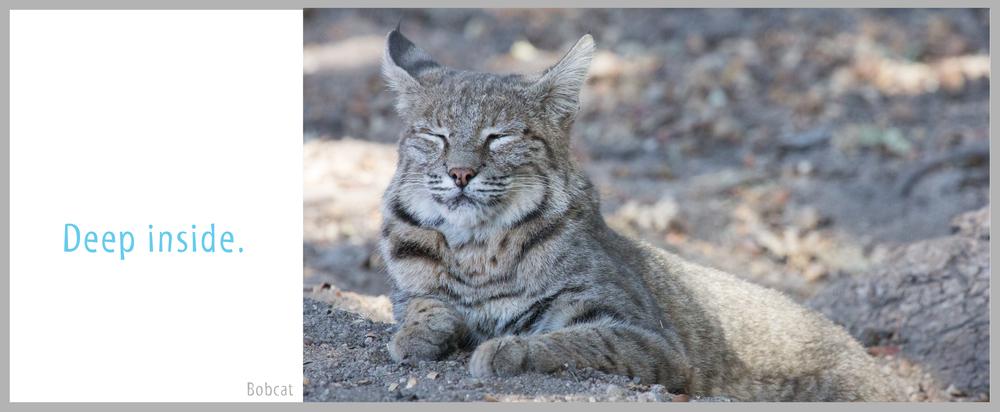 17Bond-Bobcat6500Ending.jpg