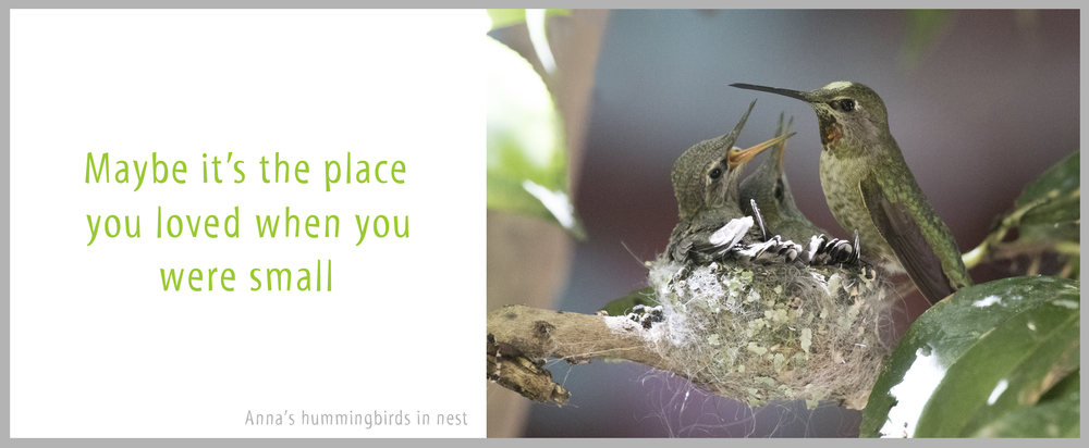11Hummingbirds.jpg