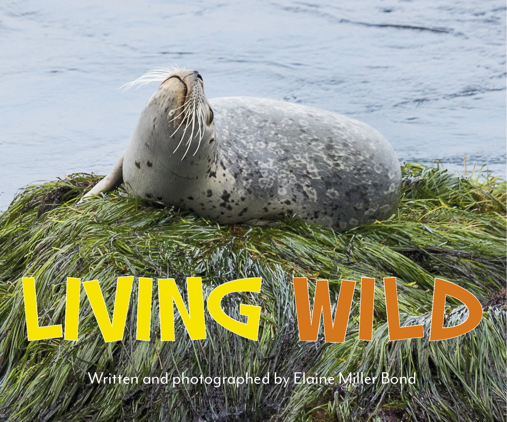 Living Wild Written and photographed by Elaine Miller Bond Heyday Books (Spring 2017)