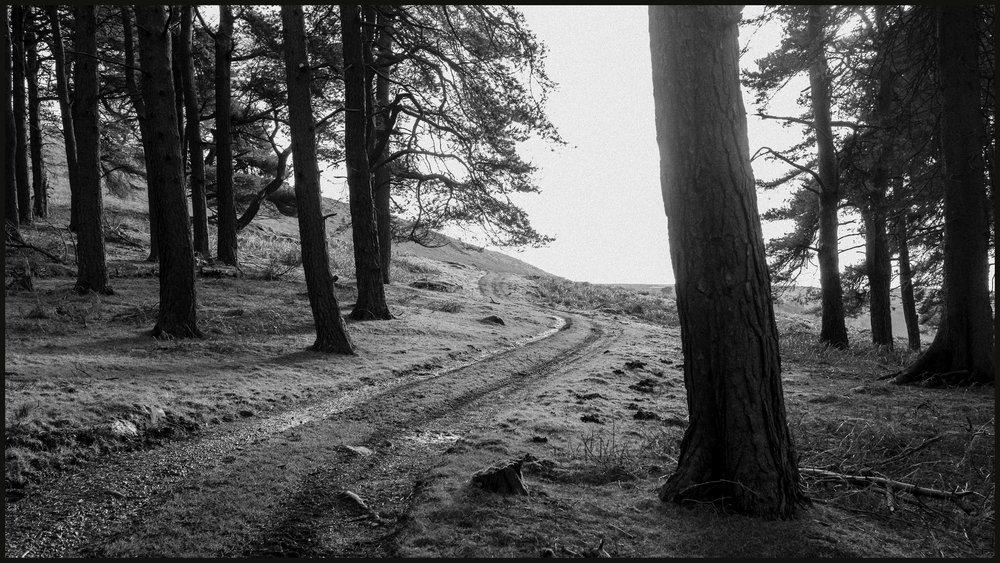 Pathway.jpg