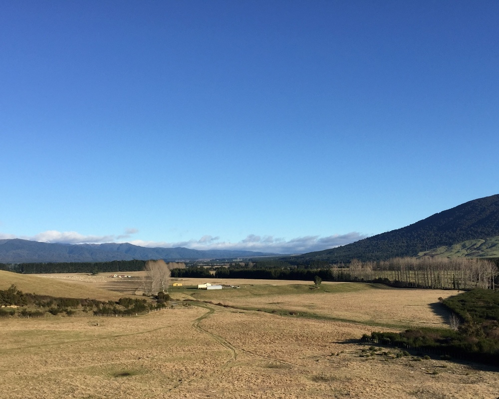View from the walking track near Tongariro River