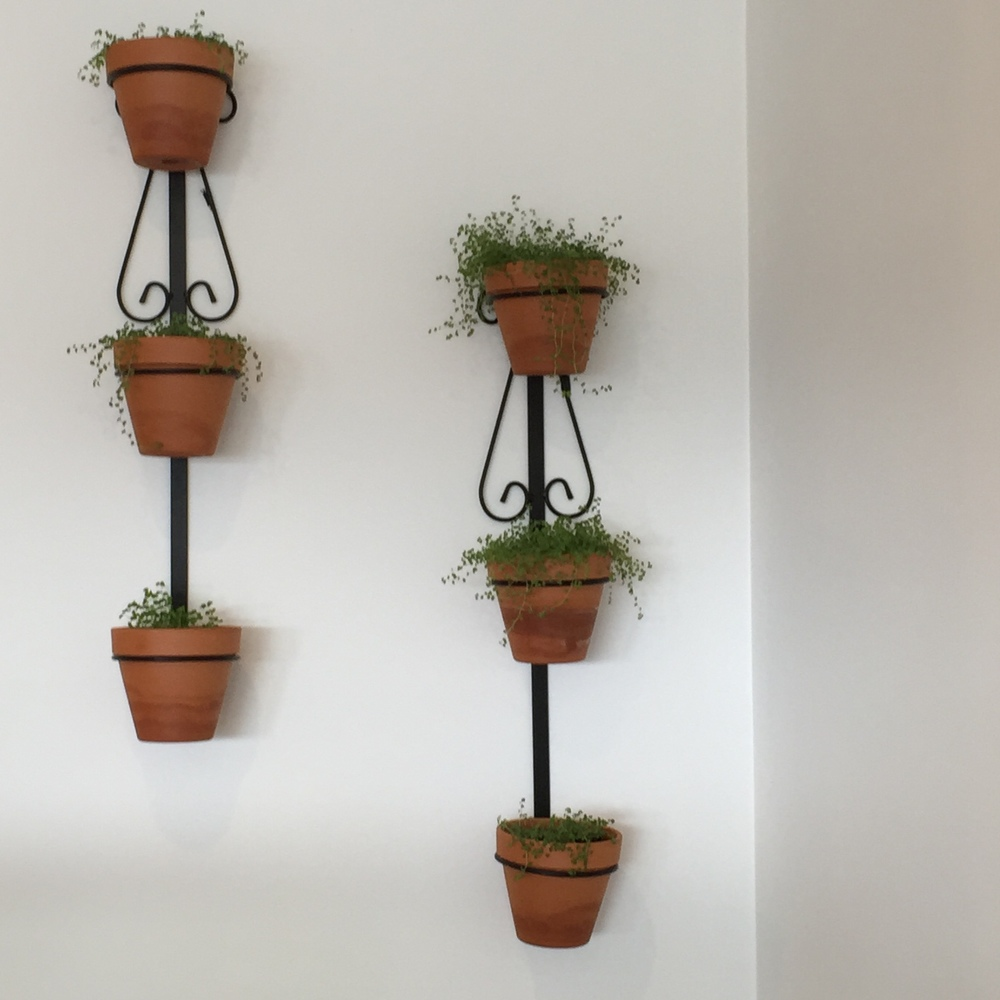Cute hanging plants