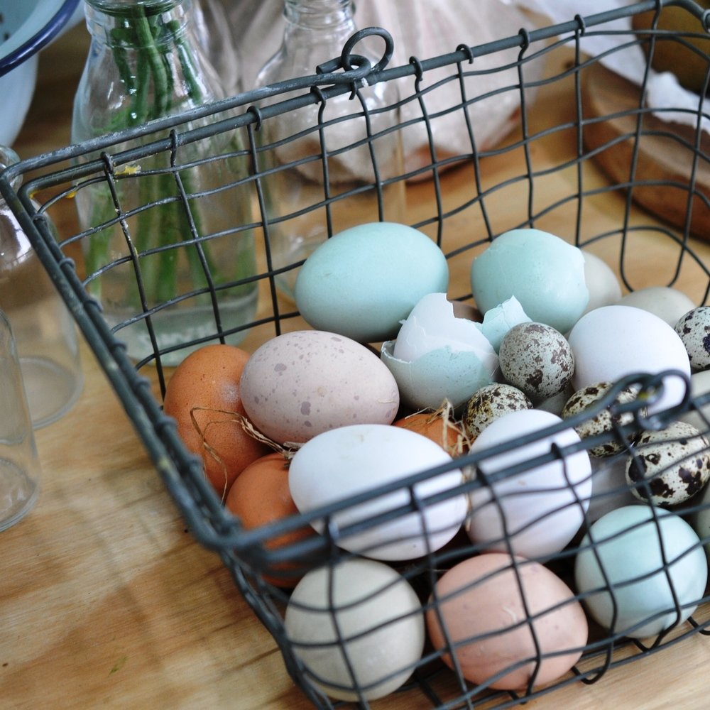 Eggs from The Forest Cantina's chickens