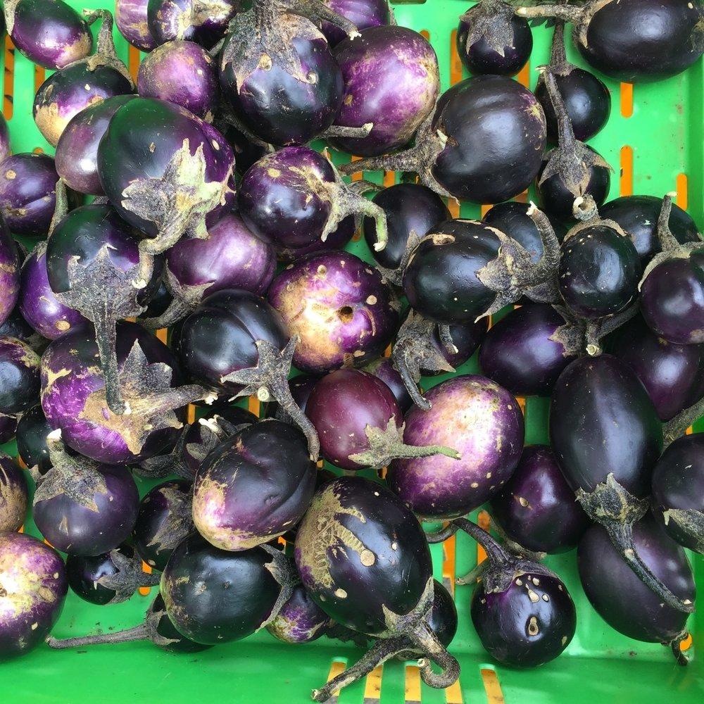 baby aubergine.JPG